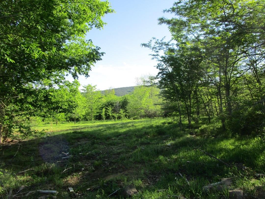 Sold Property | Little River Frontage Nashoba, OK 74558 7