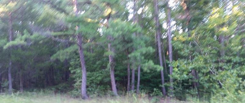 Pending | Cabin On 10 Acres Hodgen, OK 74939 11