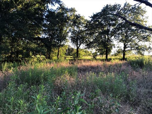 | Build Your Dream Home On 5 Wooded Acres At Blackberry Camp! Coleman, OK  2