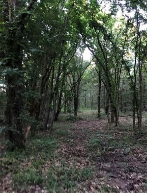 | Build Your Dream Home On 5 Wooded Acres At Blackberry Camp! Coleman, OK  6