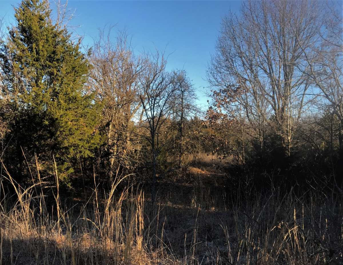 Land for sale in Coleman, OK | 9450 S Eli Road Coleman, OK 73432 1