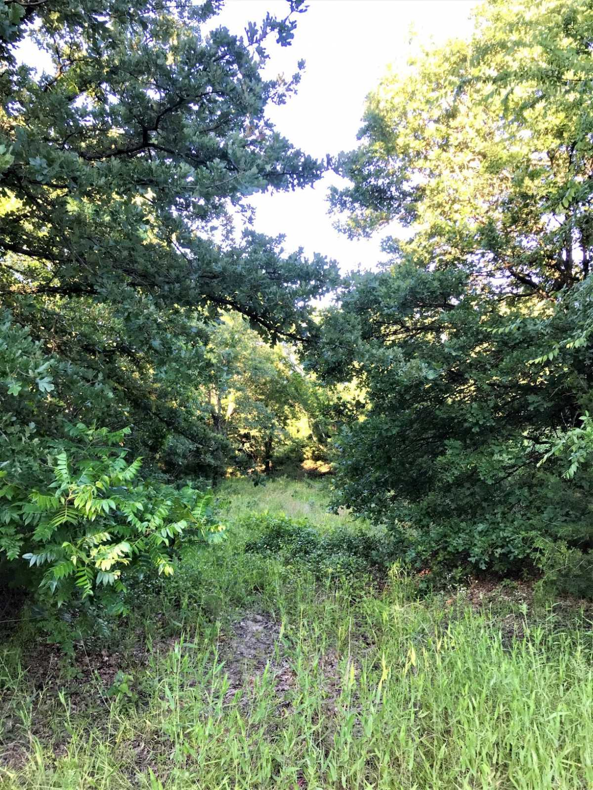 Land for sale in Coleman, OK | 9450 S Eli Road Coleman, OK 73432 12