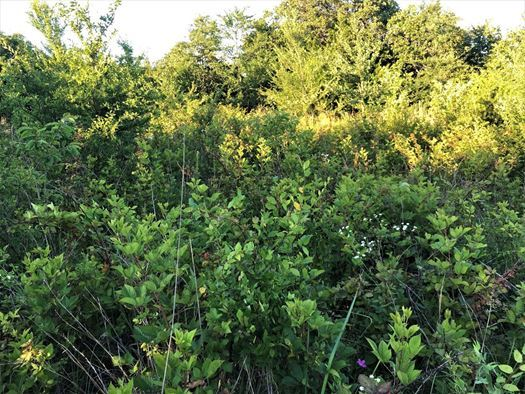 Land for sale in Coleman, OK | 9450 S Eli Road Coleman, OK 73432 9