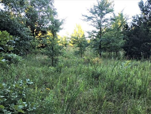 Land for sale in Coleman, OK | 9450 S Eli Road Coleman, OK 73432 10
