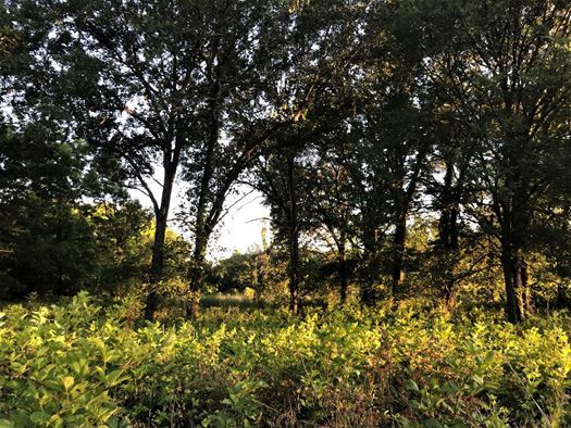 Land for sale in Coleman, OK | 9150 S Eli Road Coleman, Oklahoma 73432 0