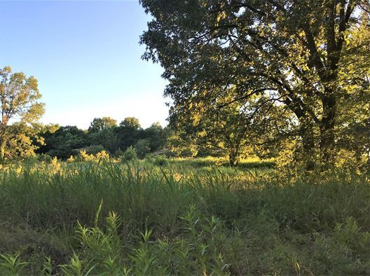 Land for sale in Coleman, OK | 9150 S Eli Road Coleman, Oklahoma 73432 7