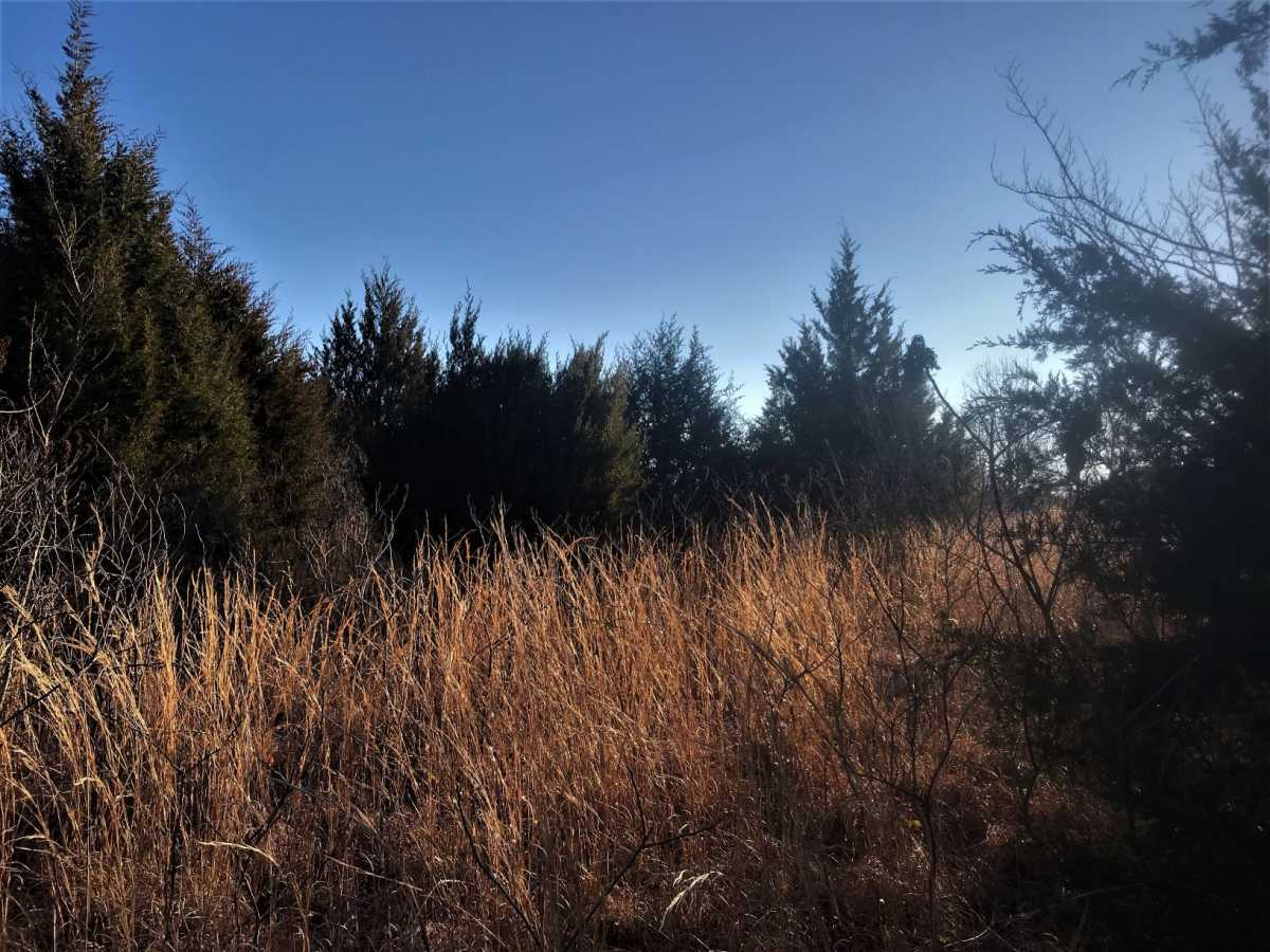 Land for Sale Coleman, OK | 9250 S Eli Road Coleman, OK 73432 0