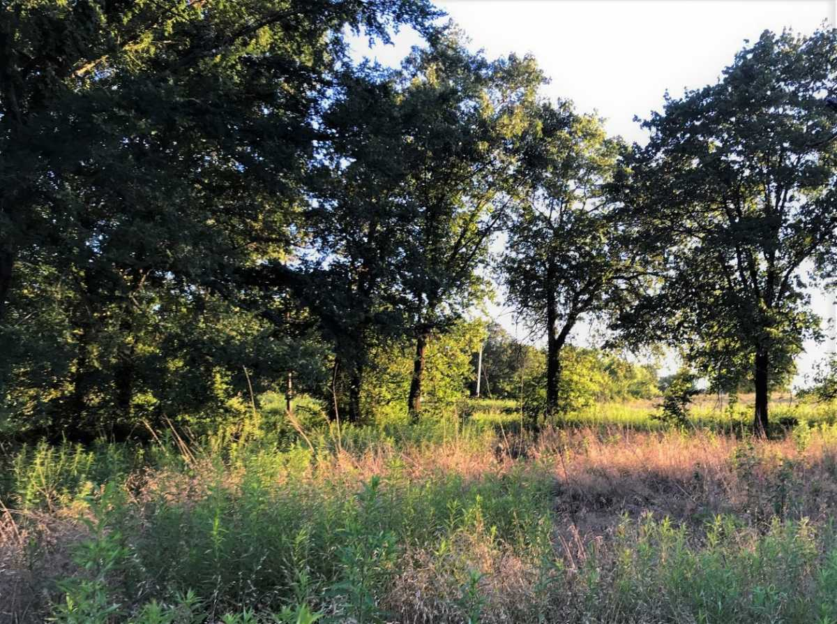 Land for sale in Coleman, OK | 9200 S Eli Road Coleman, OK 73432 1