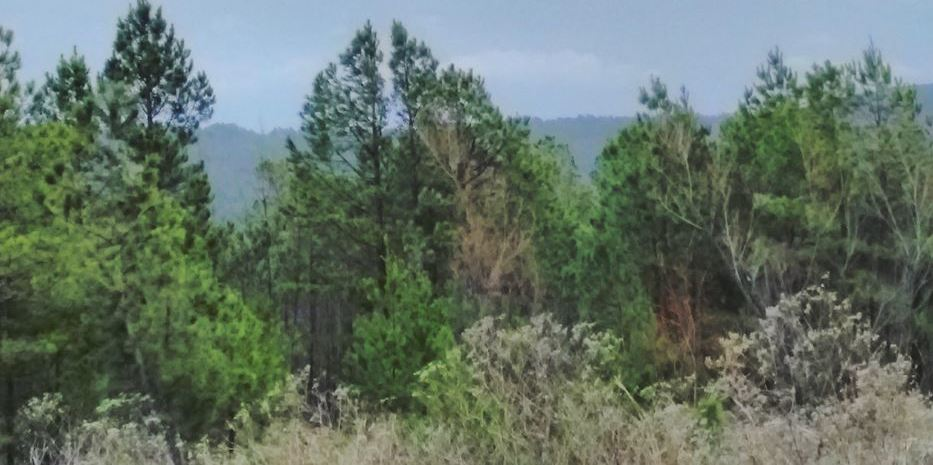 Pending | 5 Acre Homesite Canyon View Estates Talihina, OK 74571 10