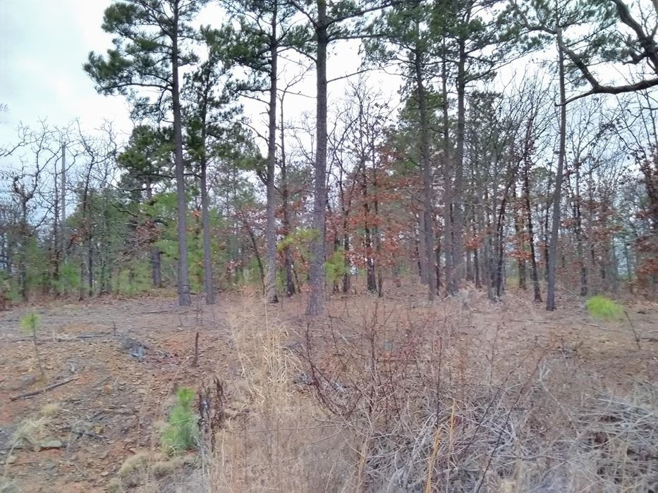 Pending | 5 Acre Homesite Canyon View Estates Talihina, OK 74571 11