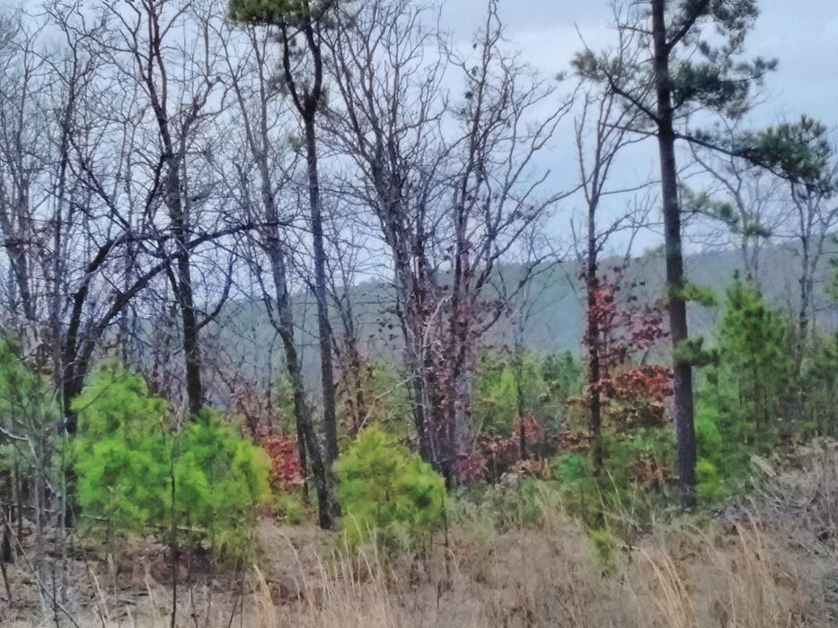 Pending | 5 Acre Homesite Canyon View Estates Talihina, OK 74571 3