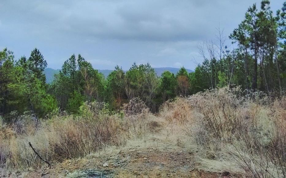 Pending | 5 Acre Homesite Canyon View Estates Talihina, OK 74571 4