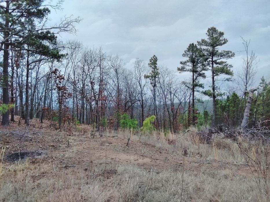 Pending | 5 Acre Homesite Canyon View Estates Talihina, OK 74571 7