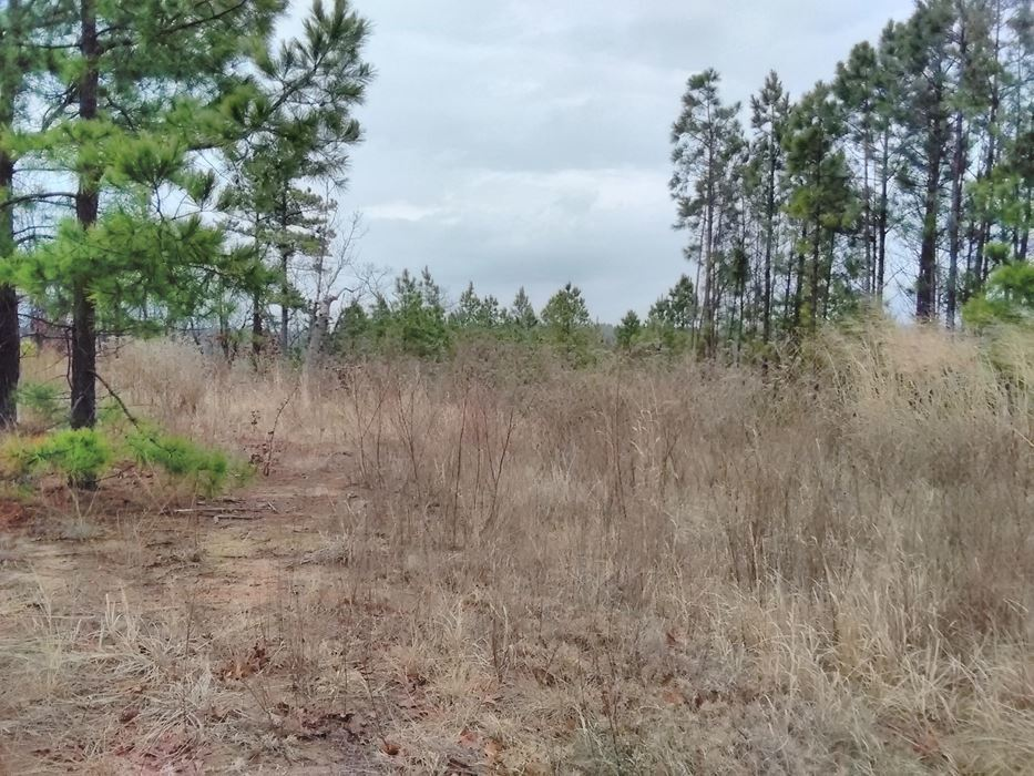Pending | 5 Acre Homesite Canyon View Estates Talihina, OK 74571 8