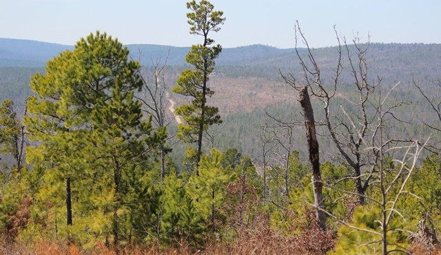 | Saddle Gap Ranch Estates Tuskahoma, OK 74574 8