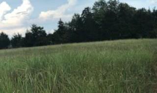 Land in Brenham | 0000 Bleiblerville Bleiblerville, TX 77833 5