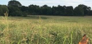 Land in Brenham | 0000 Bleiblerville Bleiblerville, TX 77833 8