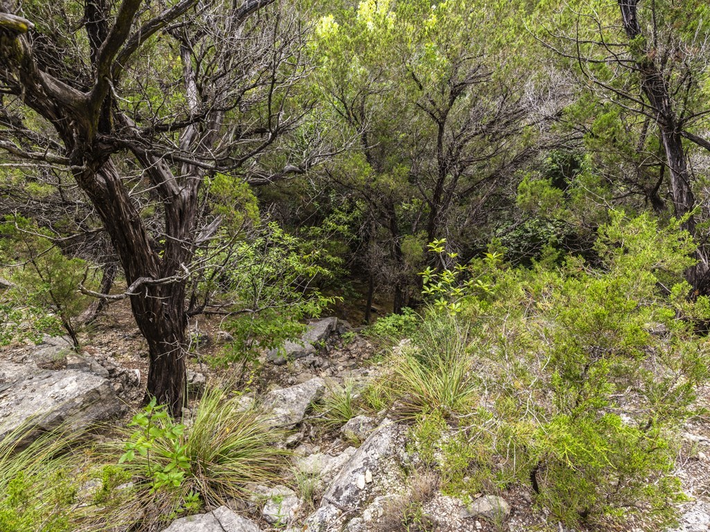 Sold Property | 15005 Dexler Drive Austin, TX 78734 7