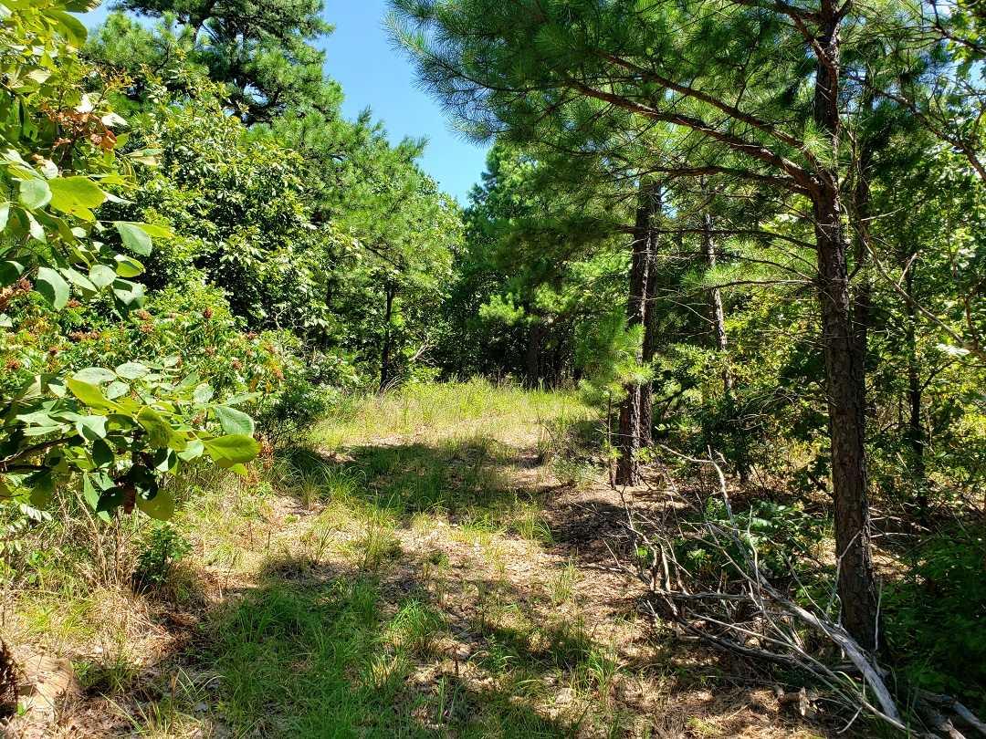 Hunting Land in Oklahoma    Bengal, OK  12