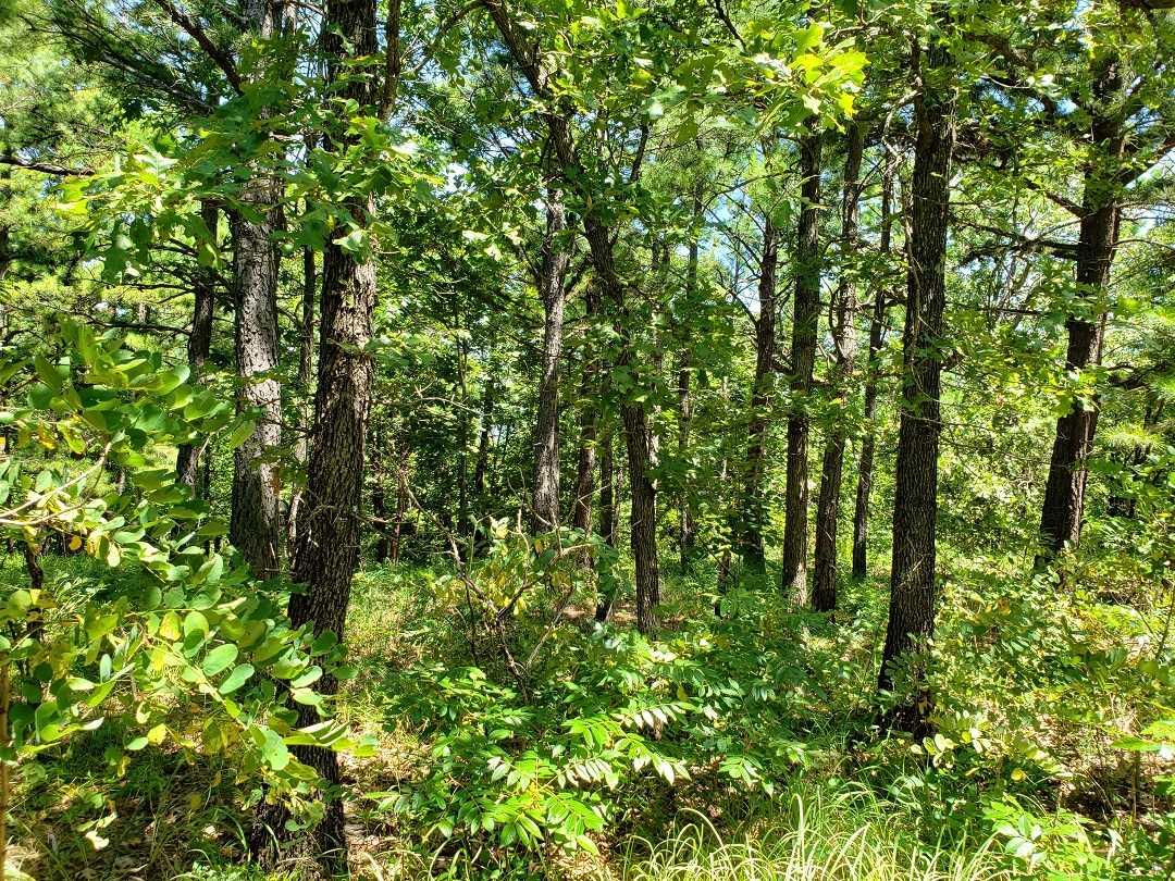 Hunting Land in Oklahoma    Bengal, OK  16