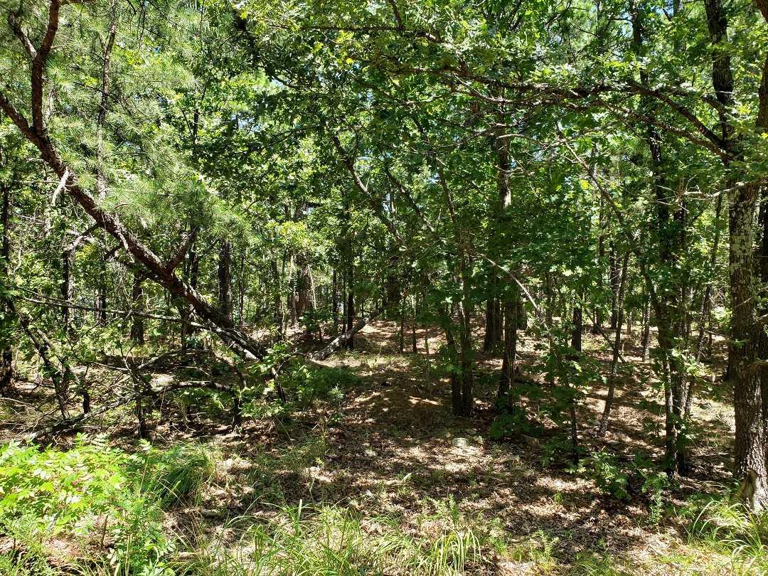 Hunting Land in Oklahoma    Bengal, OK  20