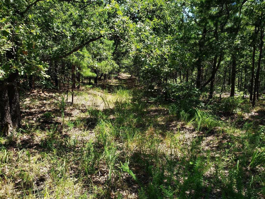 Hunting Land in Oklahoma    Bengal, OK  21