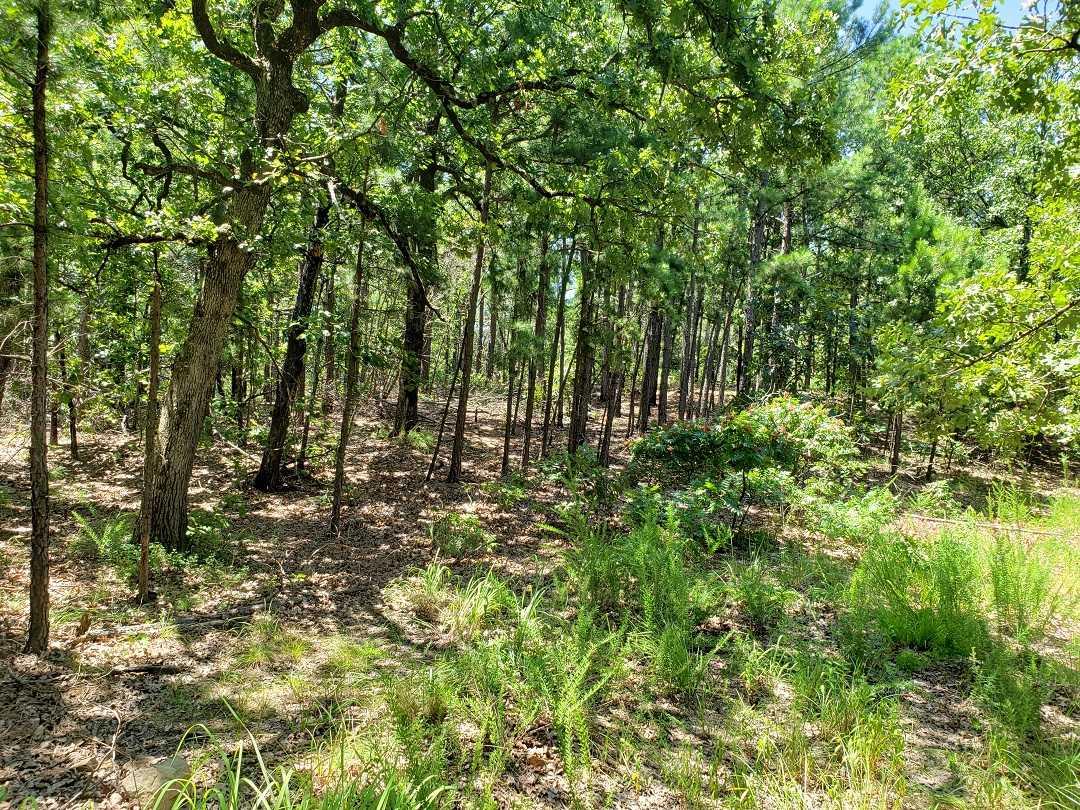 Hunting Land in Oklahoma    Bengal, OK  23