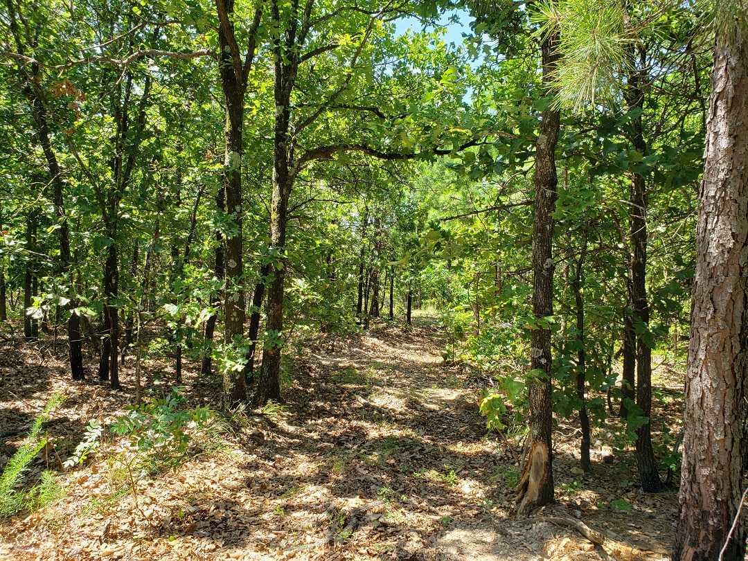 Hunting Land in Oklahoma    Bengal, OK  26