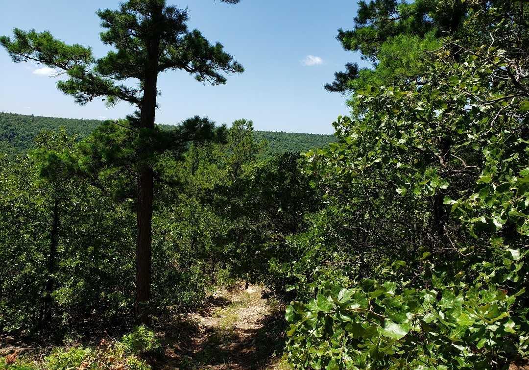 Hunting Land in Oklahoma    Bengal, OK  30