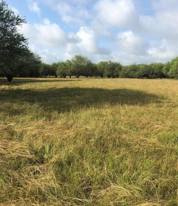 Sold Property | TBD Whit Williams Road Pattison, TX 77466 12