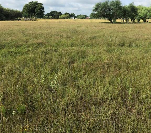 Sold Property | TBD Whit Williams Road Pattison, TX 77466 14