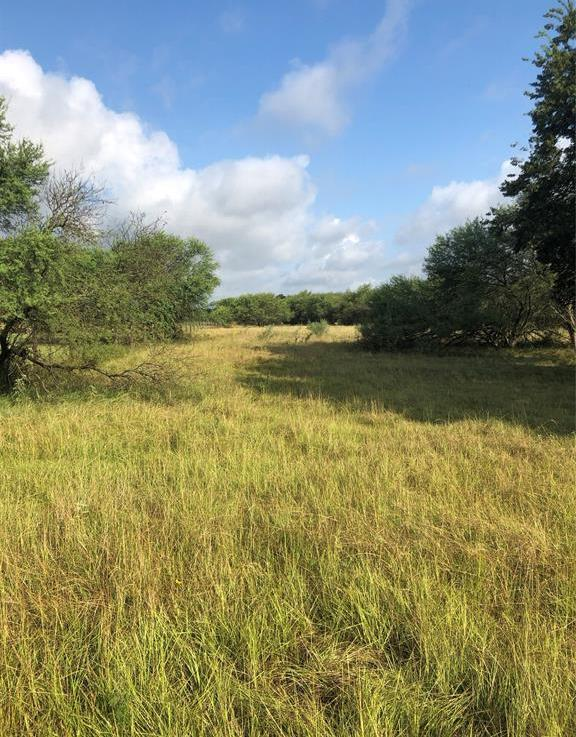 Sold Property | TBD Whit Williams Road Pattison, TX 77466 7