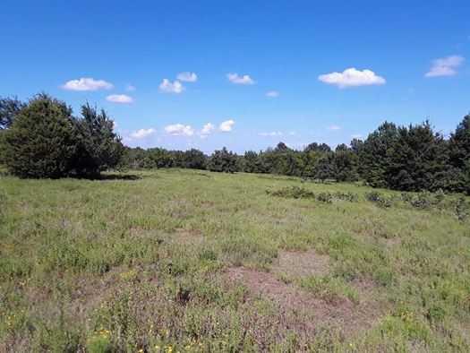 Muskogee County Cattle/Recreational Ranch | N4210 Rd/E0980 Rd Oktaha, OK 74450 1