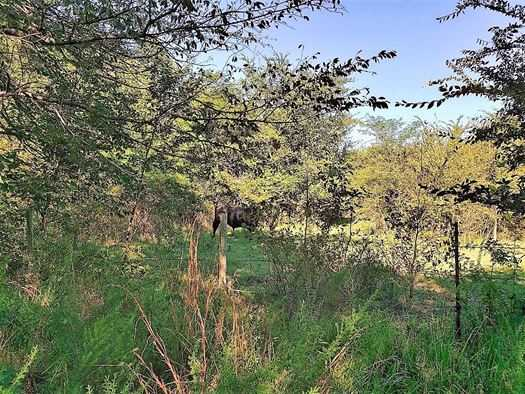 Muskogee County Cattle/Recreational Ranch | N4210 Rd/E0980 Rd Oktaha, OK 74450 34