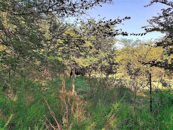 Muskogee County Cattle/Recreational Ranch   N4210 Rd/E0980 Rd Oktaha, OK 74450 34