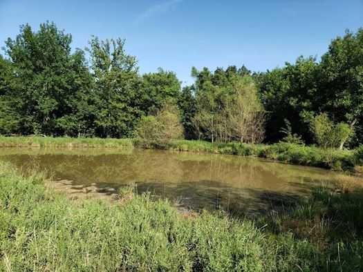 Muskogee County Cattle/Recreational Ranch | N4210 Rd/E0980 Rd Oktaha, OK 74450 38