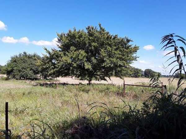 Muskogee County Cattle/Recreational Ranch   N4210 Rd/E0980 Rd Oktaha, OK 74450 5