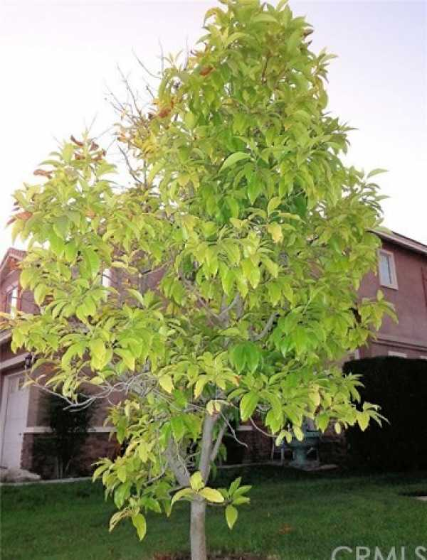 Active | 12474 Harwick Drive Rancho Cucamonga, CA 91739 26
