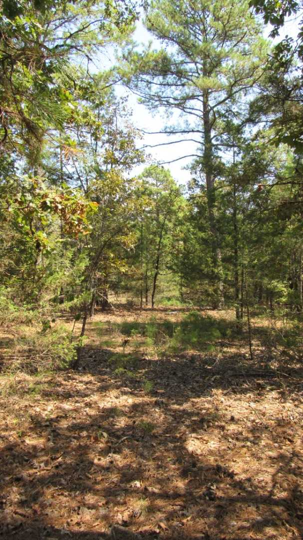 Active | 0000 D4135 Rd #7 - Kiamichi Wilderness Moyers, OK 74557 13
