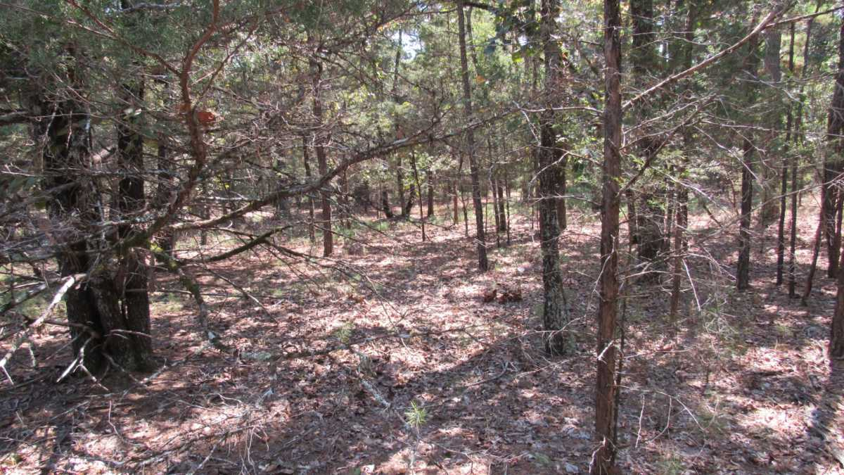 Active | 0000 D4135 Rd #7 - Kiamichi Wilderness Moyers, OK 74557 19