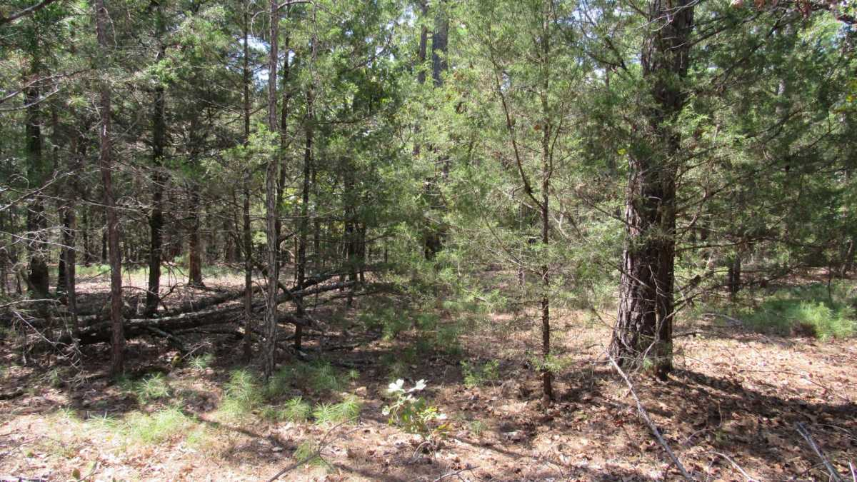 Active | 0000 D4135 Rd #7 - Kiamichi Wilderness Moyers, OK 74557 20