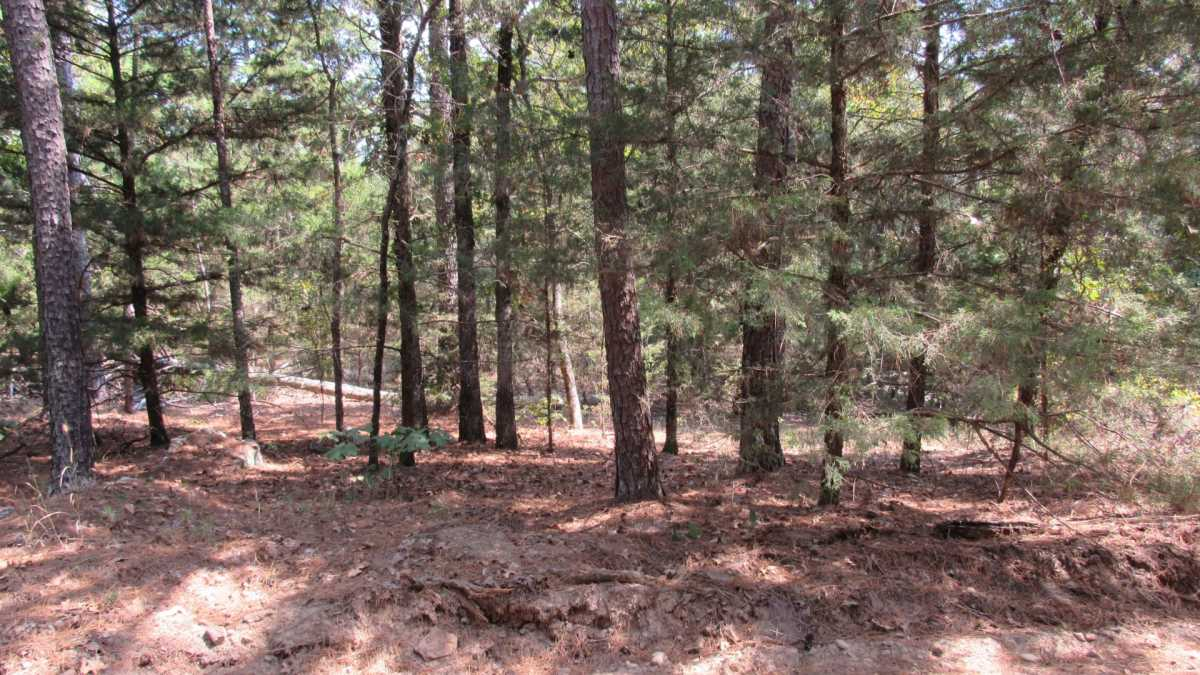 Active | 0000 D4135 Rd #7 - Kiamichi Wilderness Moyers, OK 74557 23
