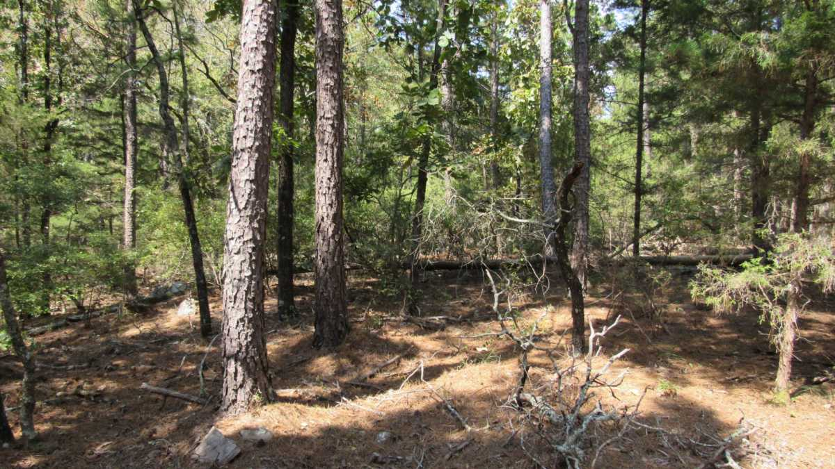 Active | 0000 D4135 Rd #7 - Kiamichi Wilderness Moyers, OK 74557 30