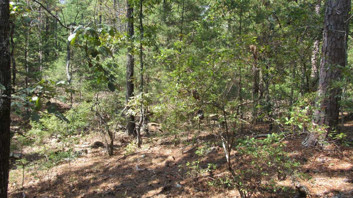 Active | 0000 D4135 Rd #7 - Kiamichi Wilderness Moyers, OK 74557 35