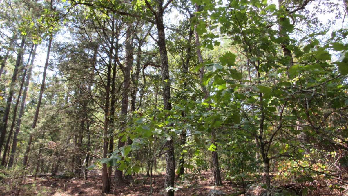 Active | 0000 D4135 Rd #7 - Kiamichi Wilderness Moyers, OK 74557 6