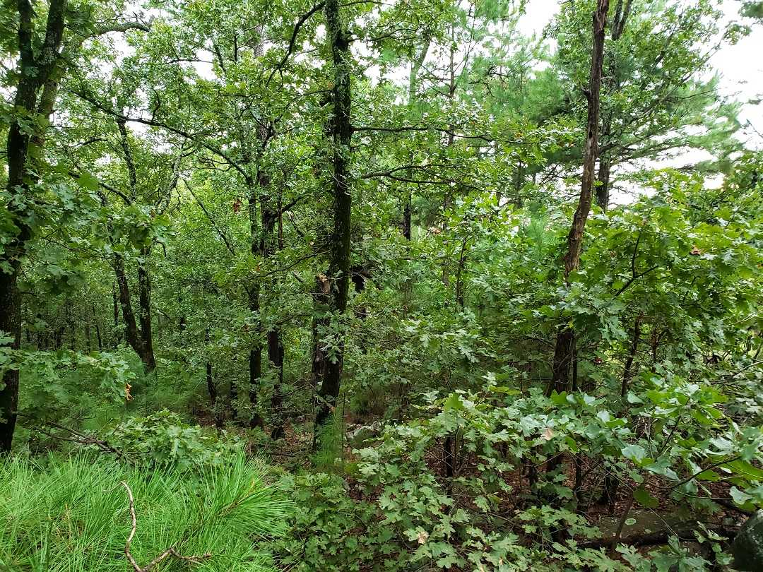 Active | AWESOME LITTLE 15 ACRES HUNTING PROPERTY Panola, OK 74578 6