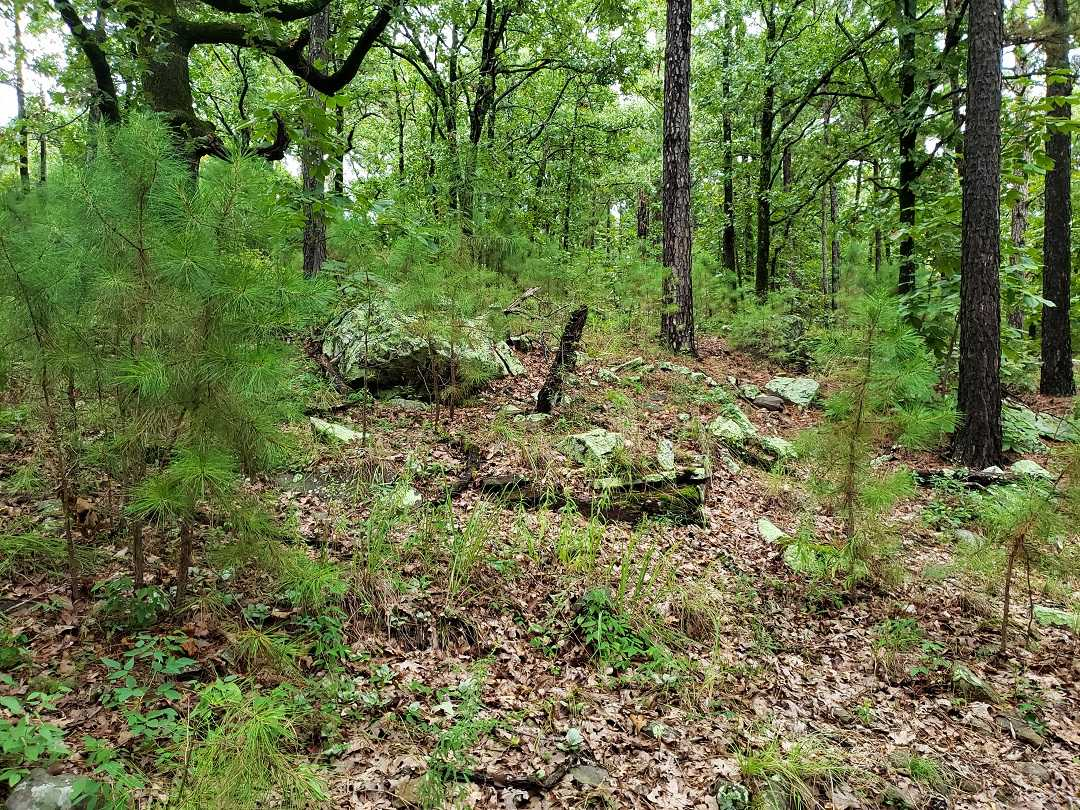Active | AWESOME LITTLE 15 ACRES HUNTING PROPERTY Panola, OK 74578 7