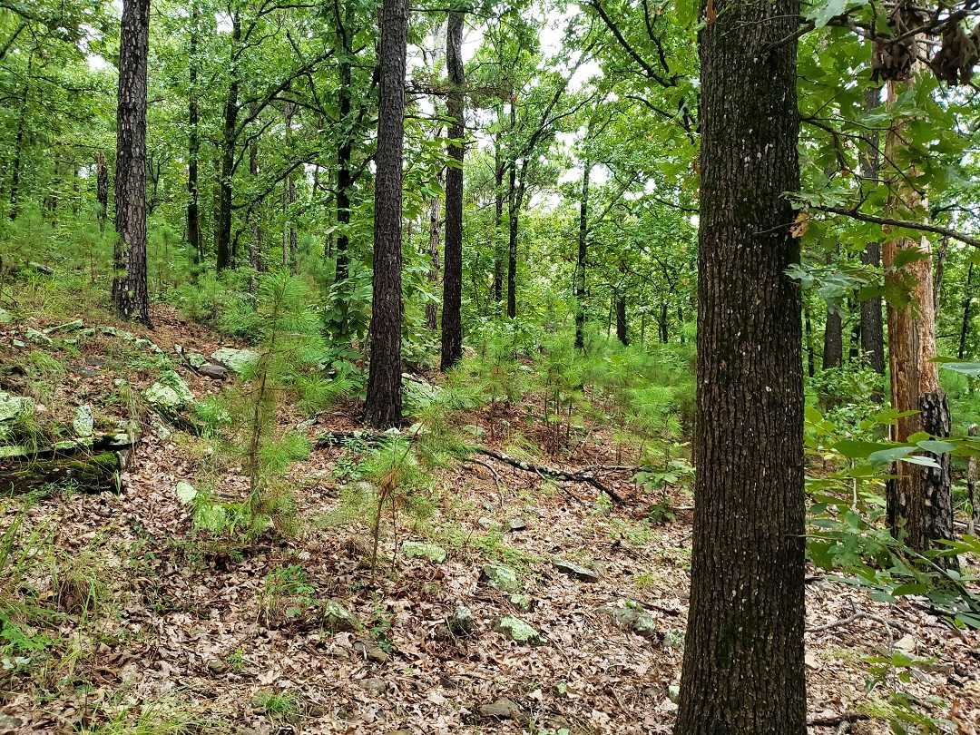 Active | AWESOME LITTLE 15 ACRES HUNTING PROPERTY Panola, OK 74578 8