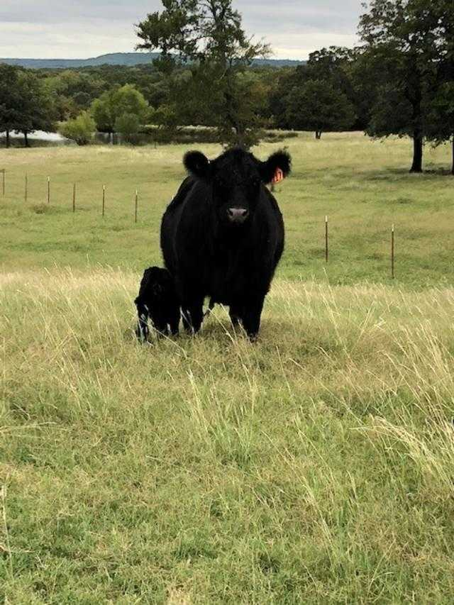 Country home acreage, house horses, small ranch pond, stock,  | 1884 Double Springs Rd Stuart, OK 74570 41