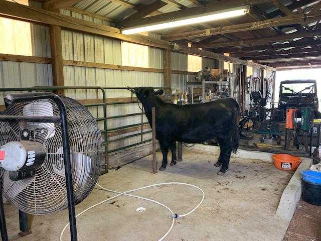 Country home acreage, house horses, small ranch pond, stock,  | 1884 Double Springs Rd Stuart, OK 74570 34